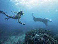 Snorkeling Manta Bay Nusa Penida – Lokasi dan Harganya